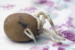 Aardappel-13
