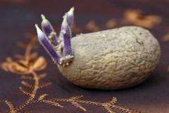 Aardappel-9